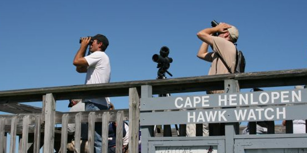 Cape Henlopen Hawk Watch